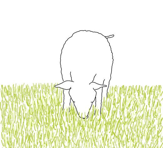 kokblog_lamb
