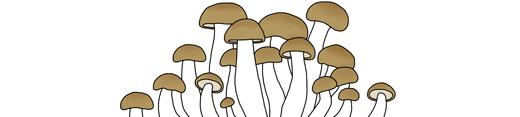 kindvall-mushroom-thumb-03